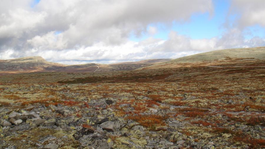 Et smukt, nordisk landskab.