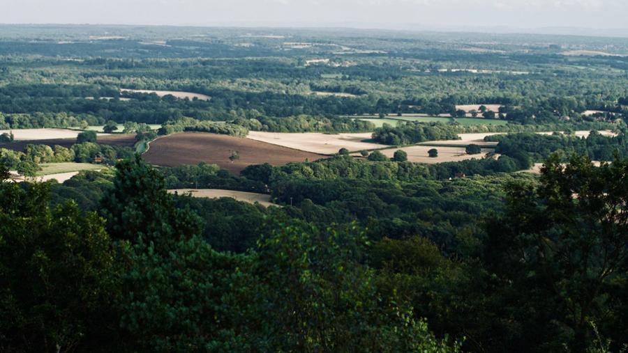 Skovene i Surrey i England, hvor Ishiguro flyttede til som barn.